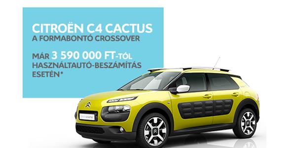 cactus_akcio